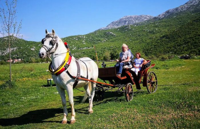 Horse carriage Dalmatian hinterland