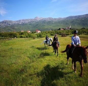 Horse riding tour Dalmatian hinterland